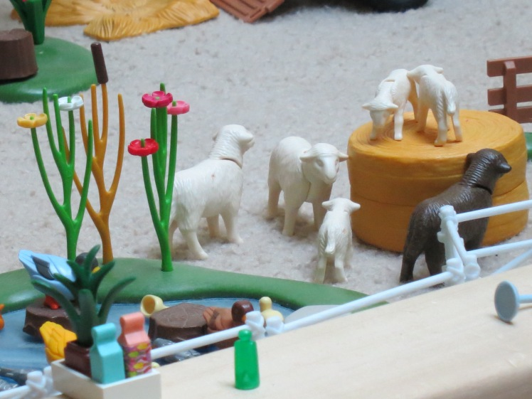 Sheep playing on Brady's Farm